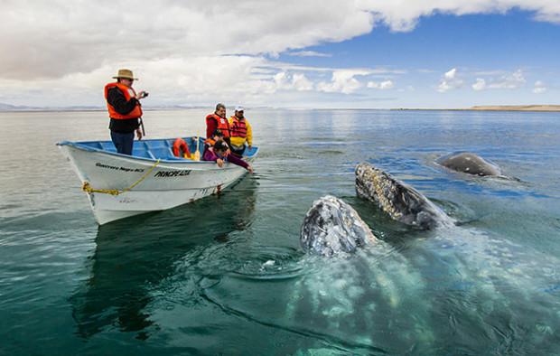 Avistamiento de Ballenas Baja California Sur