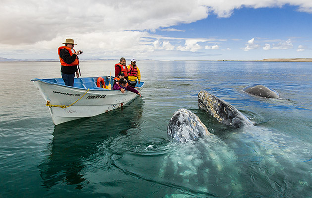 Avistamiento de Ballenas en Baja California Sur